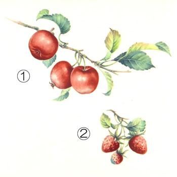 フルーツ大1~5