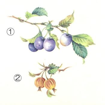 フルーツ大3