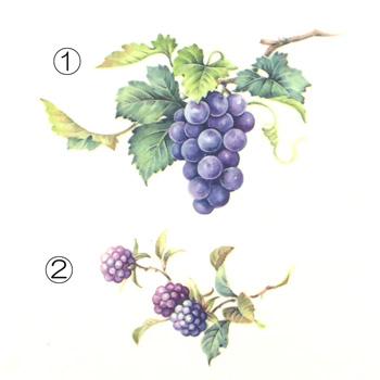 フルーツ大4