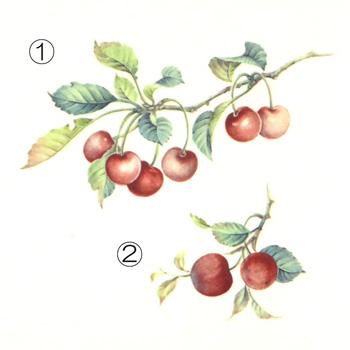 フルーツ大5
